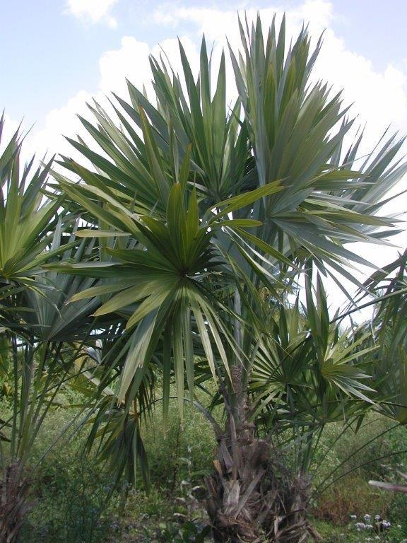 Mix D Greens Environmental Inc Plantant Com