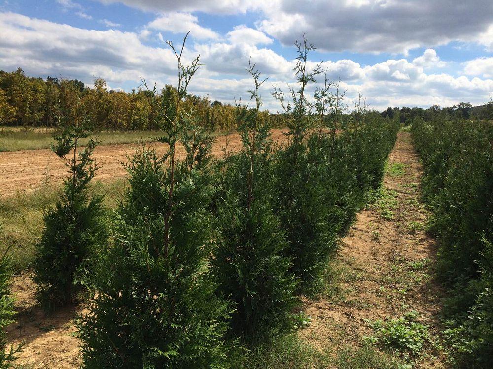 Tennessee Bush Farm Inc Plantant Com