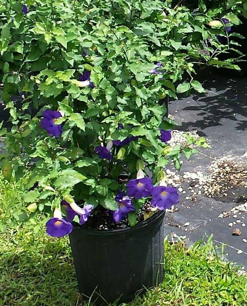 Garden Bush: Jesse Durko's Nursery