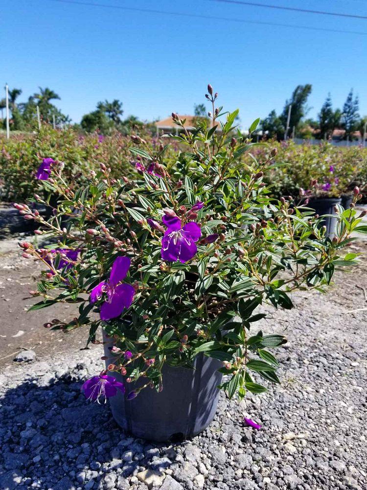 Veras Nursery Plantant Com