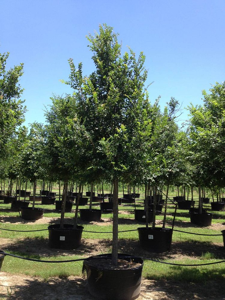 Image Gallery Flory Tree Farm