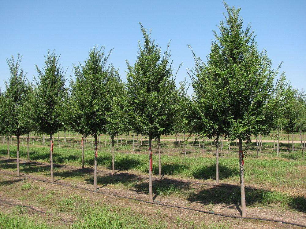 whitetail tree farm plantantcom