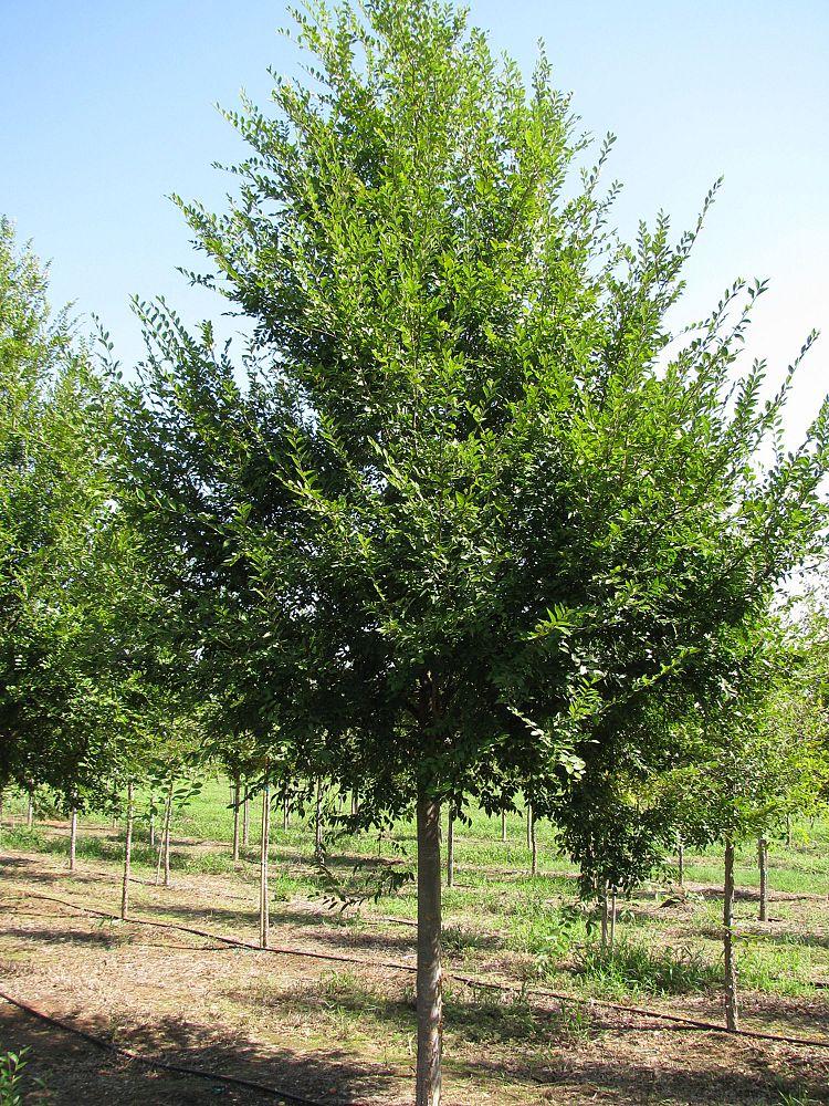 Whitetail Tree Farm Plantant Com