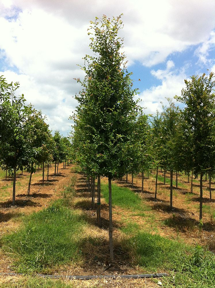 Whitetail Tree Farm Plantant Com