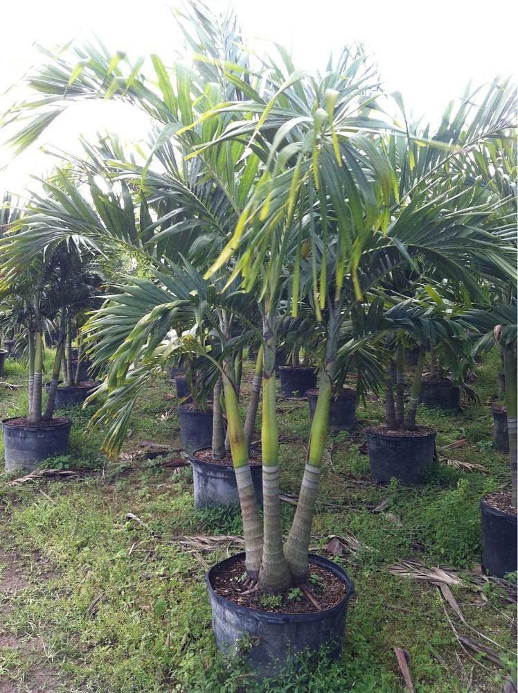 3 D S Nursery Plantant Com