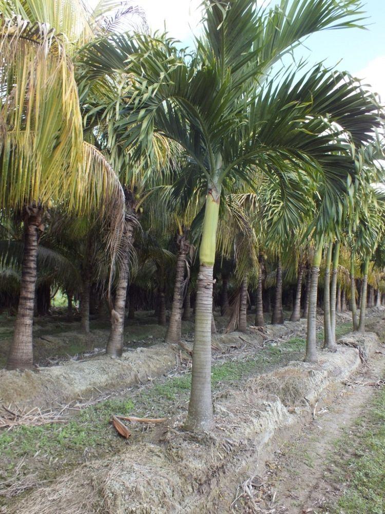 Tropical Farms Nursery Plantant Com