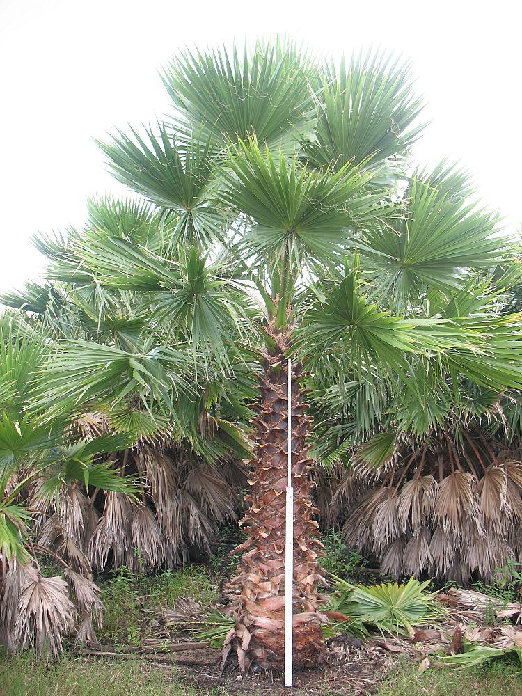 Universal Tree Farm LLC. | plantANT.com