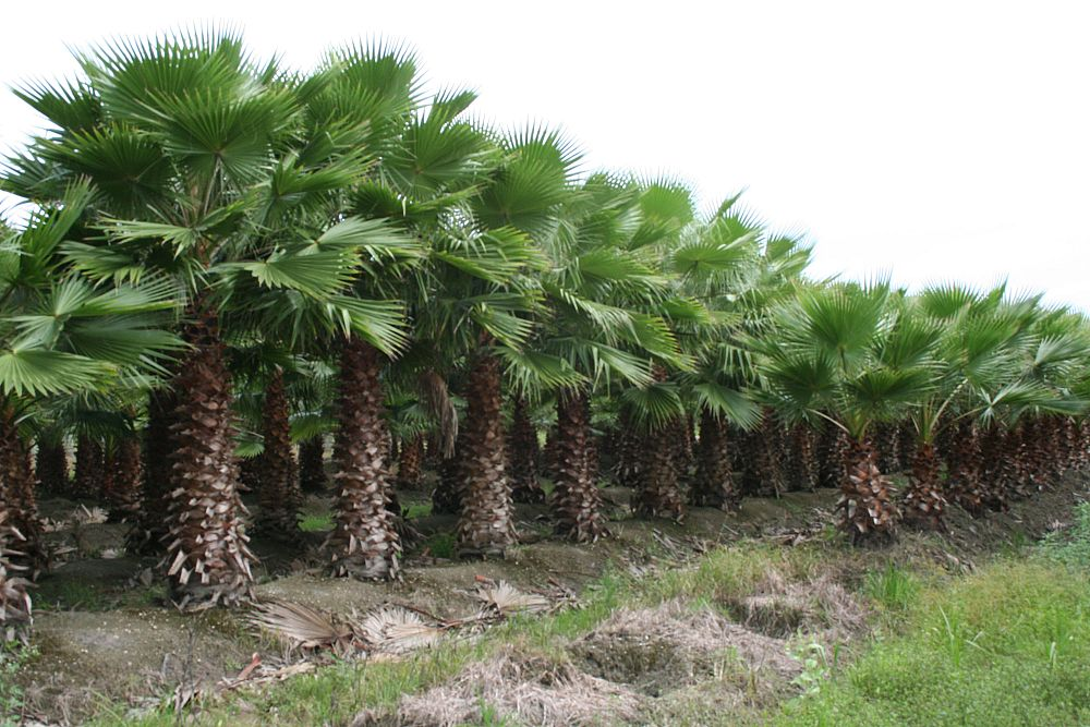 Florida Tree Farms Inc Plantant Com